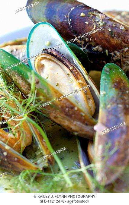 New Zealand Green Lipped Mussels; Close Up