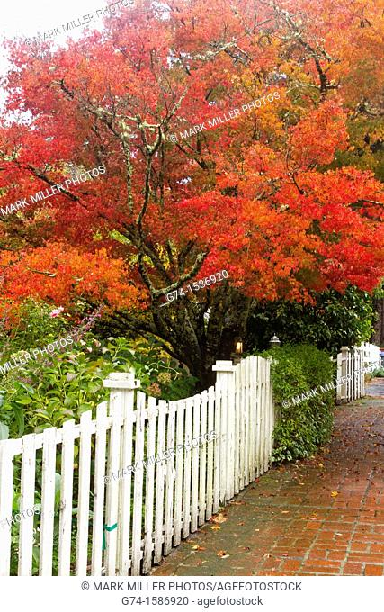 Fall colors and white picket fence