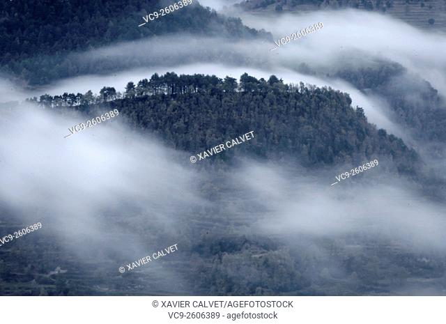 Fog dancing on the forest , Osona , Catalonia , Spain