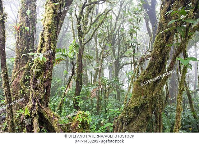 Monteverde Cloud Forest Preserve  Costa Rica
