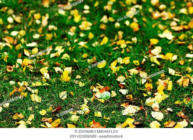 autumn leaves in the park
