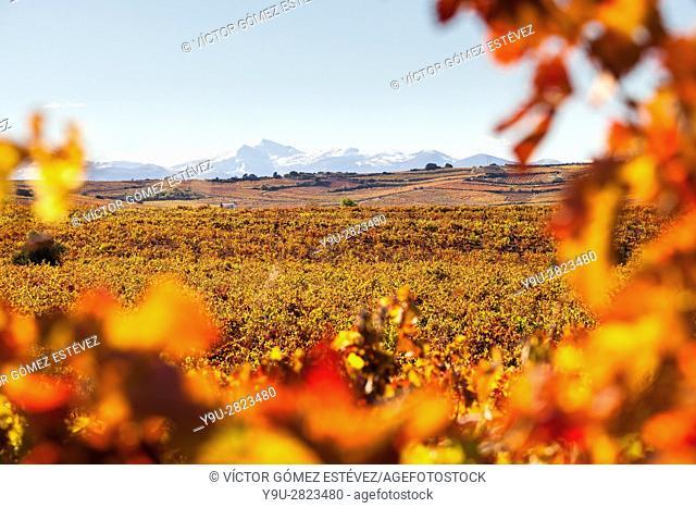 Autumn landscape, vineyards, Lar Rioja, Spain