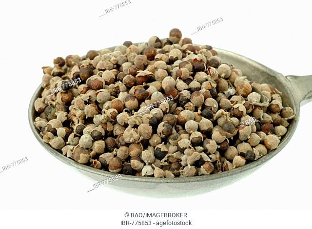 Vitex, Chaste Tree, Chasteberry or Monk's Pepper (Vitex agnus-castus) seeds in a measuring spoon, medicinal plant