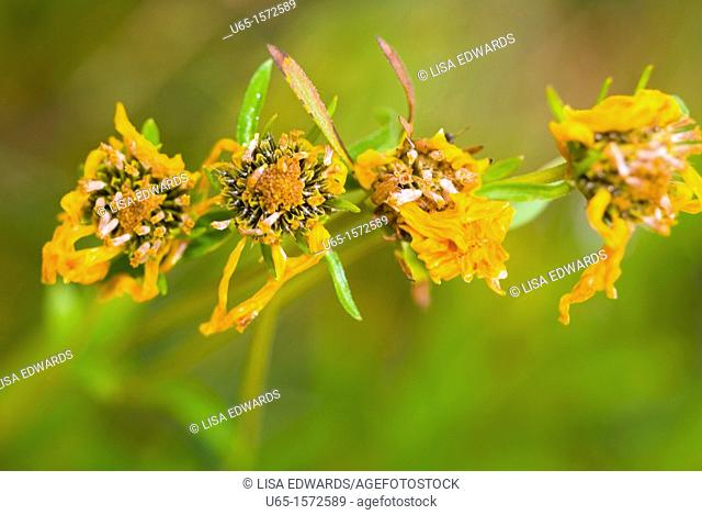 Dried wildflowers