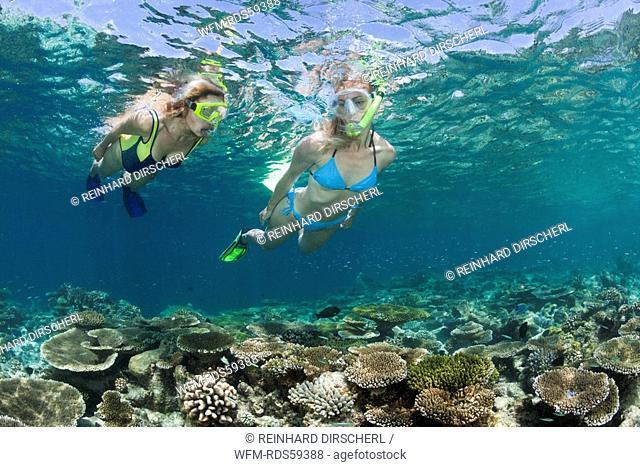 Skin Diving at Maldives, Ellaidhoo House Reef, North Ari Atoll, Maldives
