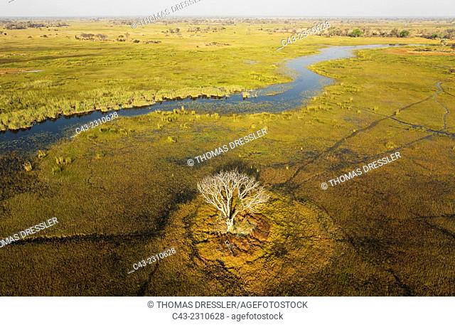 The Gomoti River with its adjoining freshwater marshland, the whitish tree has died back due to the permanently wet environment, aerial view, Okavango Delta