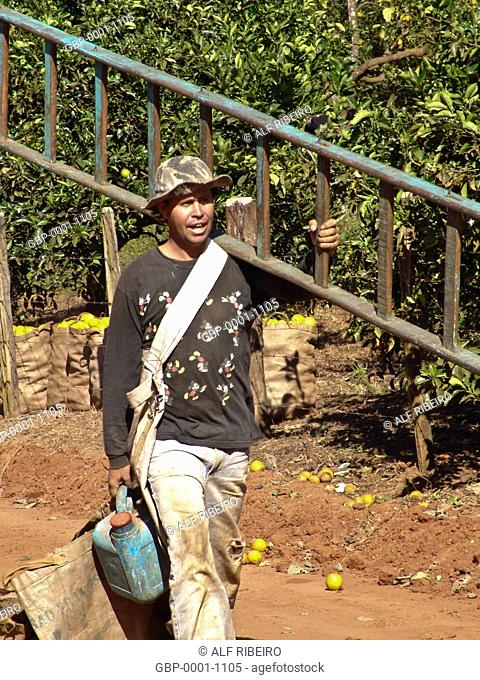 Person, Harvest Orange, Bebedouro, São Paulo, Brazil