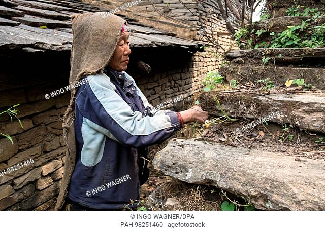 A woman works on April 13, 2017 at her house in the Annapurna Conservation Area next to the trekking route to Jhinudanda / Nepal. | usage worldwide