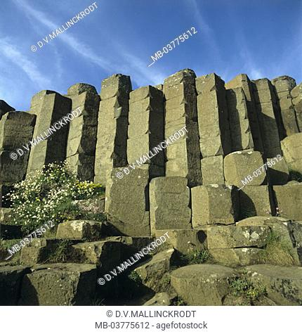 Northern Ireland, Giants Causeway, detail, Basalt columns  Ireland, 'dam of the giants', world culture place, culture, columns, basalt columns, hexagonal, relic