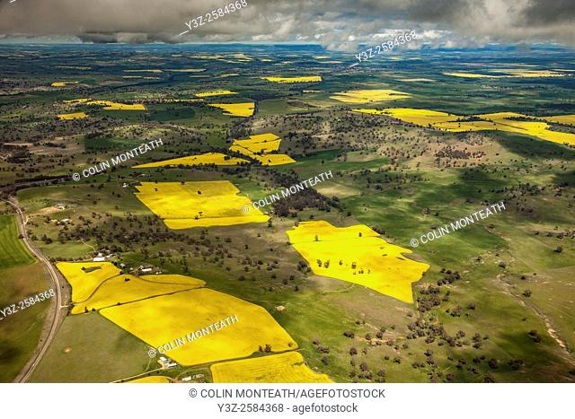 Canola (rape) seed crop, Liverpool Plains, aerial view, western NSW, Australia