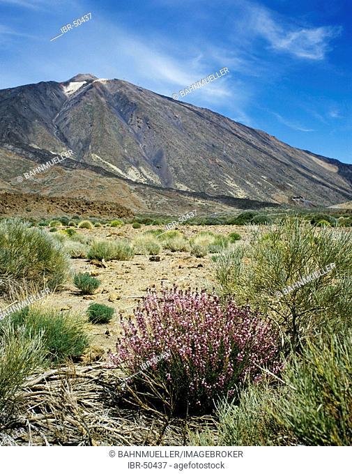 Tenerife Canary Islands Canaries Spain Parque Nacional de Las Canadas del Teide Pico del Teide