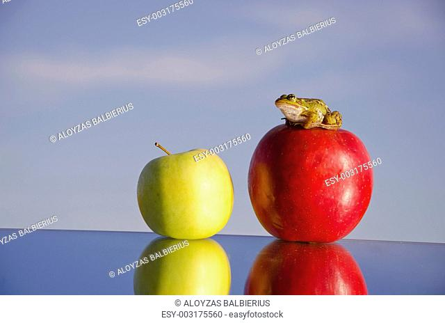 two apples on mirror and green frog