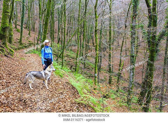 Woman with a dog in a beechwood. Señorio de Bertiz Natural Park. Navarre, Spain, Europe