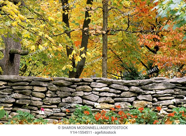 A fall rock wall in New England lines the road with Geraniums blooming in front and the orange and