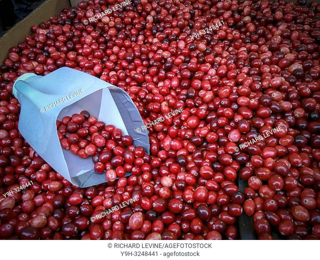 Cranberries for sale in the Union Square Greenmarket in New York on Saturday, November 24, 2018