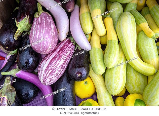 High angle view of eggplants (Solanum melongena) and a variety of gourds on display for sale at farmers' market, Rehoboth Beach, Delaware