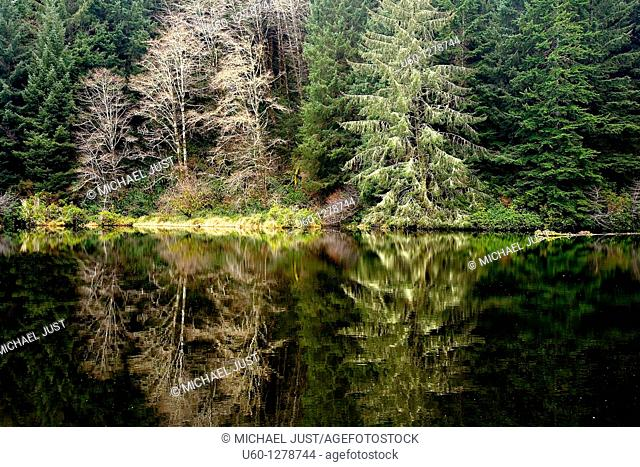 Pine trees and deciduous trees are reflected in a pond near the Oregon Coast