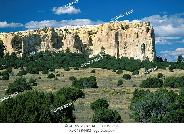 Sandstone mesa rises above Juniper forest at El Morro National Monument, New Mexico, USA