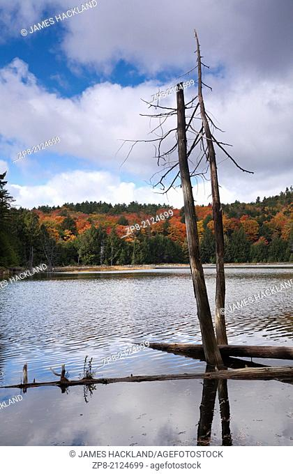 Dead trees grace the shore of a small lake in Killarney Provincial Park in Ontario, Canada