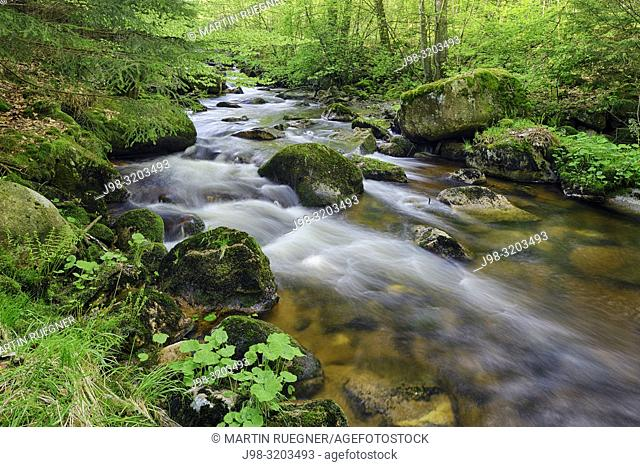Bode River (Kalte Bode) in the Elendstal valley. Kalte Bode, Schierke, Harz, Saxony-Anhalt, Germany, Europe
