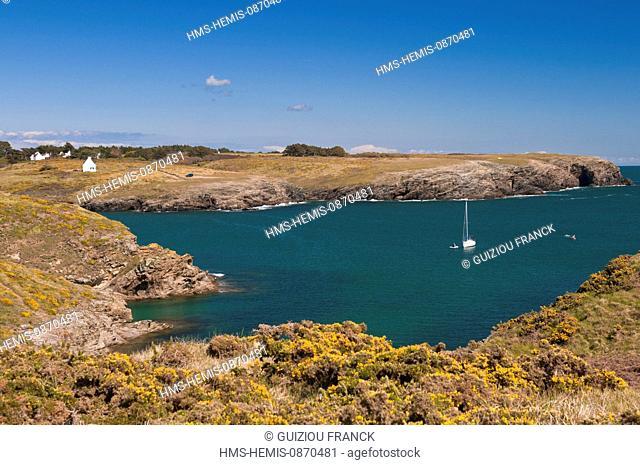 France, Morbihan, Belle Ile en Mer, the wild coast, along the GR340 between the Pointe des Poulains and Herlin beach (Bangor village), Port Kerel
