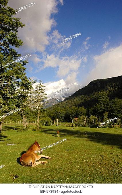 Pampa Linda, Mt. Tronador, Nahuel Huapi National Park, Patagonia, Argentina