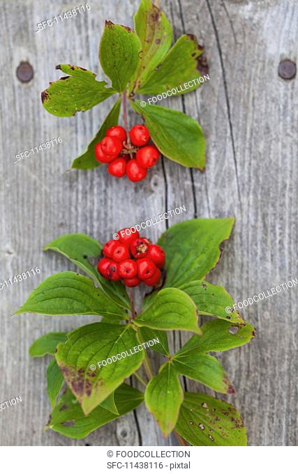 Two sprigs of red forest berries on a wooden surface (seen from above)
