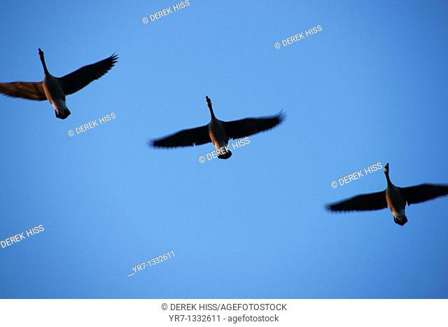Flying formation
