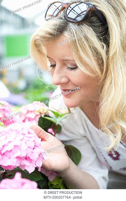 Mature woman smelling Hydrangea flowers in garden centre, Augsburg, Bavaria, Germany