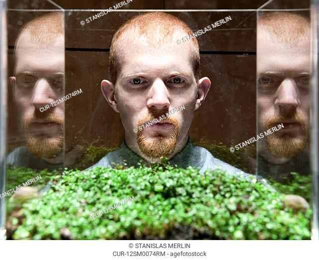 The green plant is helxine, an excellent ground cover or topiary, also known as baby tears