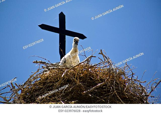 Chick stork and nest over church tower with blue sky, Badajoz, Extremadura, Spain