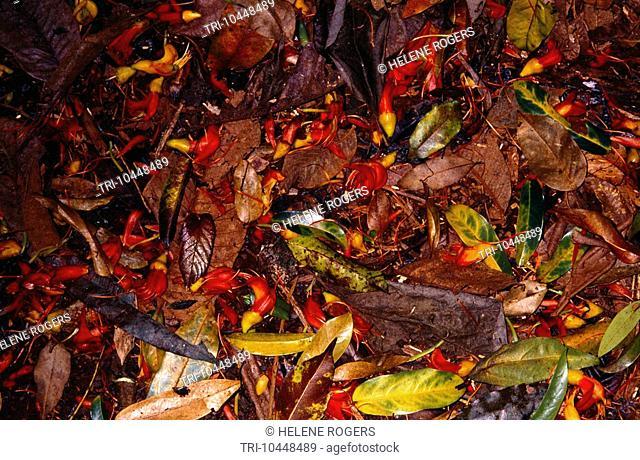 Queensland Australia Brisbane Rainforest Floor