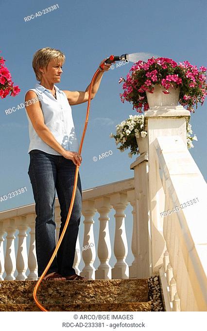 Woman watering petunia, Petunia hybride, garden hose, terrace, balustrade