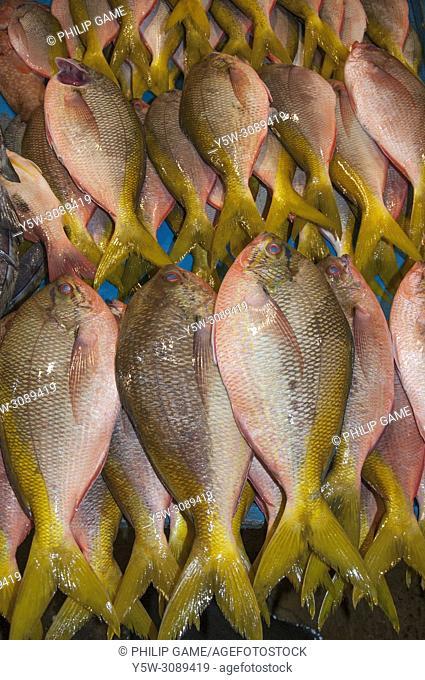 Fresh tropical fish displayed at the night market on the waterfront at Kota Kinabalu, Sabah, Malaysian Borneo