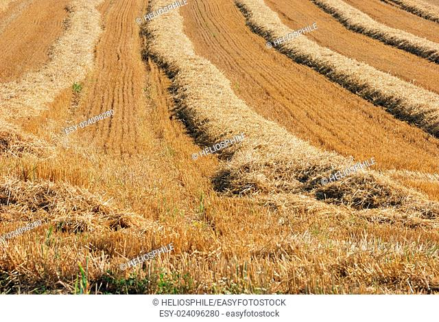 straw in a field after harvest