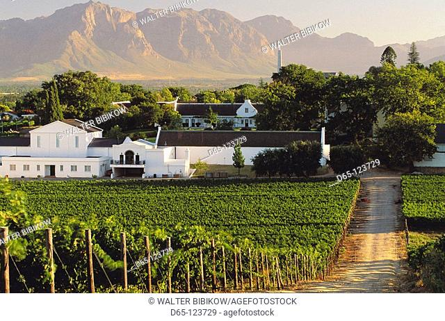 Vineyards of Labourine wine estate, Paarl, Cape Winelands. Western Cape Province, South Africa