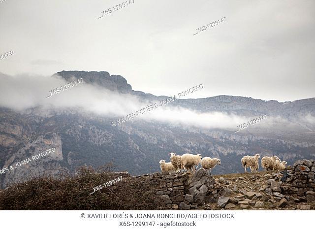 La Mula, Valley of La Fueva, Huesca, Spain