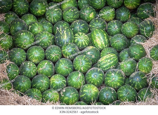 Pile of neatly placed watermelons (Citrullus lanatus), Tighmert Oasis, Morocco