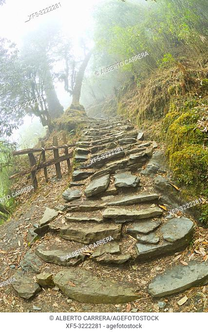 Mountain Forest Footpath, Trek to Annapurna Base Camp, Annapurna Conservation Area, Himalaya, Nepal, Asia