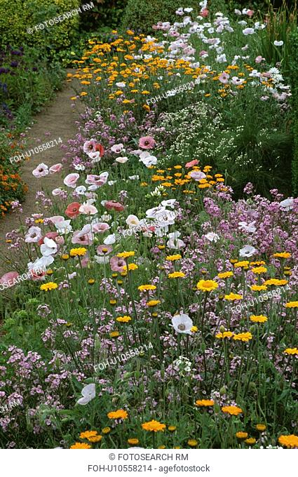 Colourful wild flower border in country garden in summer