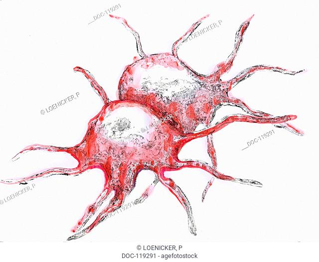 illustration - blood plate - platelet - thrombocyte
