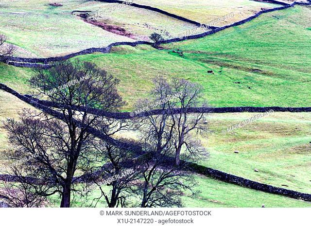 Winter Trees and Dry Stone Walls at Settle North Yorkshire England