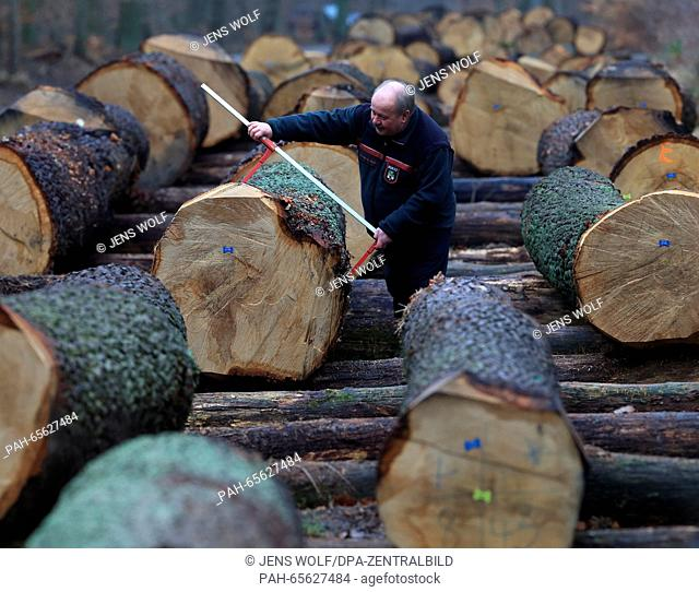 Stacked up numbered tree-trunks are seen at the timber stockyard Bischofswald near Behnsdorf, Germany, 05 February 2016. About 1