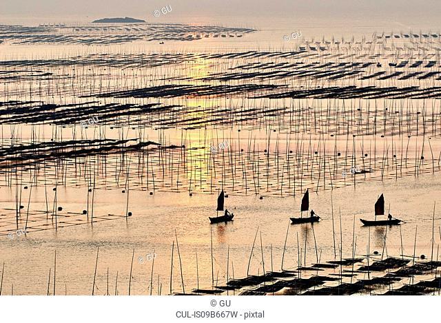 Traditional fishing poles and boats at dawn, Xiapu, Fujian, China