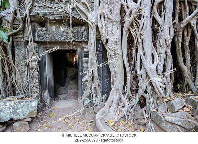 The strangler fig roots which have attacked Ta Prohm temple are one of its most amazing features