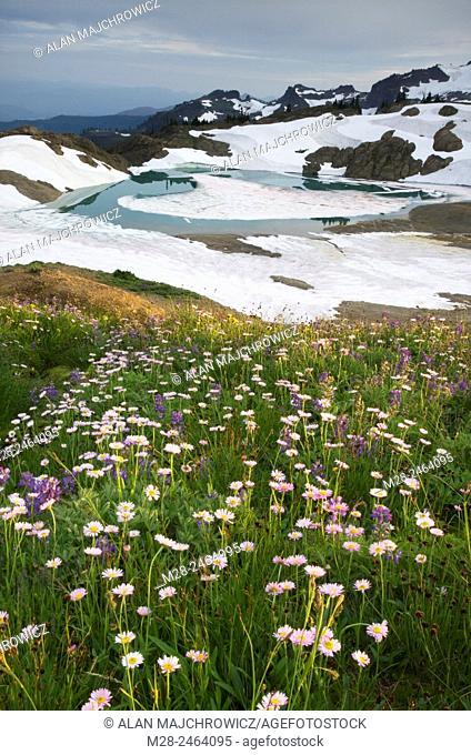 Wildflower meadows, Mount Baker Wilderness Washington