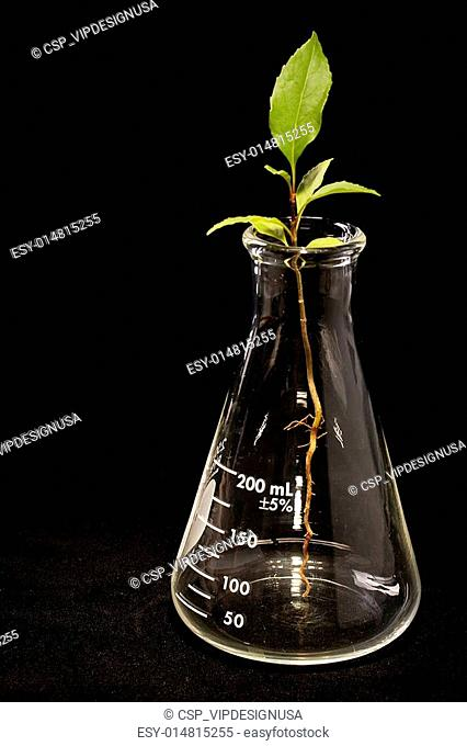 Young plant and flask
