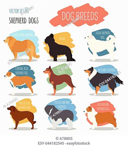 Dog breeds. Shepherd dog set icon. Flat style. Vector illustration