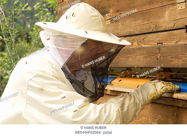 A bee-keeper