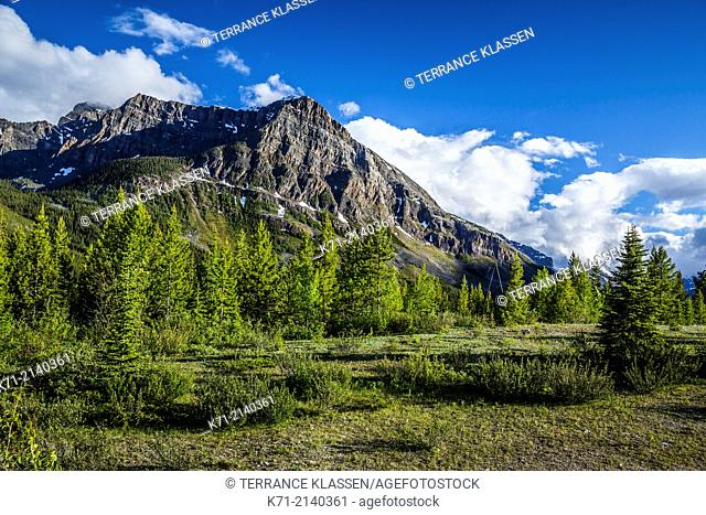 A view of Castle Mountain from Kootenay National Park, British Columbia, Canada